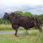 MATHEWS, Sally - Welsh Black Bull 2008-9